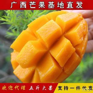 产地直发广西百色小台芒果五斤一级大果新鲜芒果批发包邮微商代发