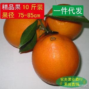 新鮮水果 純天然綠色美容食品10斤包郵 一件代發 贛南臍橙 橙子