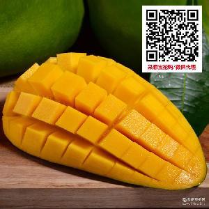 青芒水果一件代发 越南进口新鲜芒果5斤装 营养美味大青芒玉芒