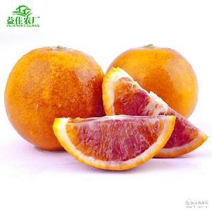 秭歸血橙塔羅科順豐9斤包郵天然新鮮水果果園現摘現發