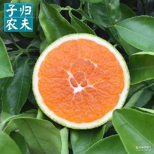 預售2017年10月三峽特產 爆漿秋橙 秭歸臍橙 九月紅橙子 5斤包郵