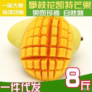 包邮水果批发代发 现摘热带新鲜芒果 8斤装 四川攀枝花凯特芒果