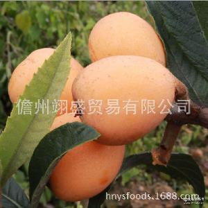 甜過米易枇杷時令應季新鮮孕婦水果 海南新鮮枇杷果