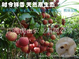 箱 岭南名果新鲜荔枝低价预售全国特惠包邮148 5KG