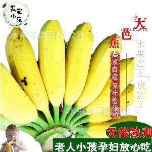 廣西香蕉孕婦水果大芭蕉香蕉牛芭蕉現摘現發無催熟劑自然熟8斤包