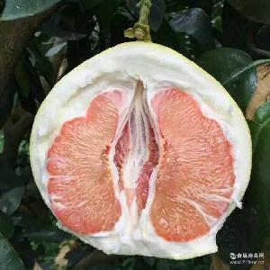 平和音加农庄红心柚子 果园直发批发 新鲜甜柚子红肉基地直供