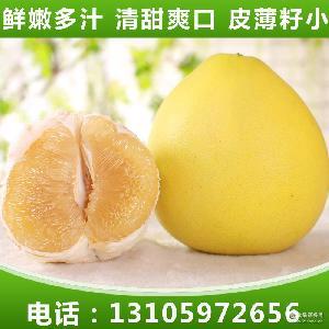 平和蜜柚 新鲜前岐四季柚 新鲜有机水果柚 柚子批发西柚