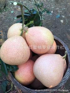 福建平和蜜柚红心柚子新鲜水果红肉蜜柚一件代发欢迎代销