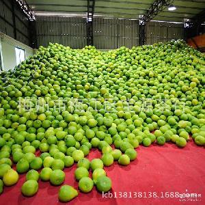 梅州金柚新鲜水果柚子2015年新鲜批发沙田柚 特价促销正宗沙田柚