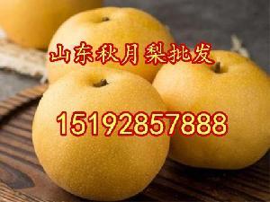 山東省秋月梨批發價格 今年秋月梨價格省多少