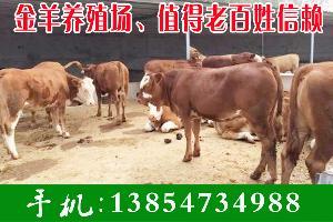 哪里賣牛犢價格便宜