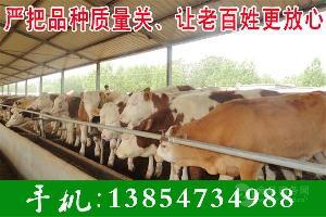 牛种苗价格
