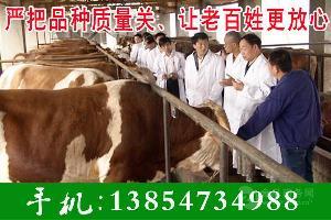 哪里牛犊出售