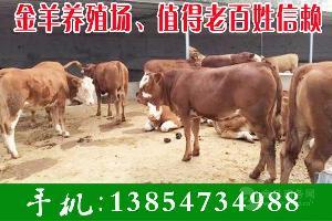 3個月牛犢價格