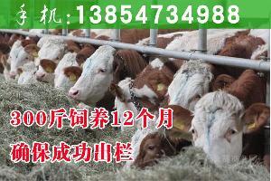 肉牛犊出售信息