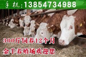 去哪买牛犊