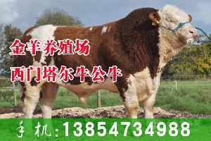 肉牛多少钱一头