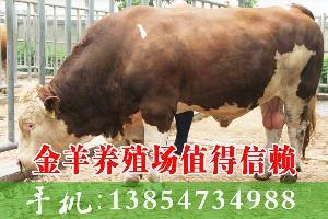 400斤牛苗 价格
