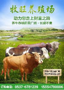 肉牛犊批发价格
