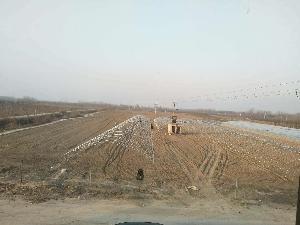 西瓜紅(普薯32號)紅薯苗價格 紅薯苗基地開始供應