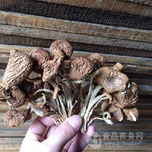開傘茶樹菇格廣昌5號茶樹菇開膜茶樹菇干貨產地直銷