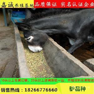 青岛德州黑驴多少钱一斤
