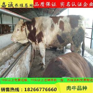 广东省肉牛养殖场
