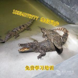 鱷魚養殖場山東鱷魚養殖場地址方位