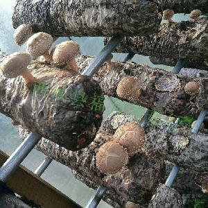 天然优质保鲜菇(手工选装)
