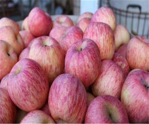 今年烟台栖霞冷库红富士苹果价格