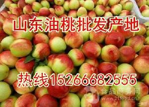 山东大棚油桃价格-今日山东油桃批发价格多少钱一斤