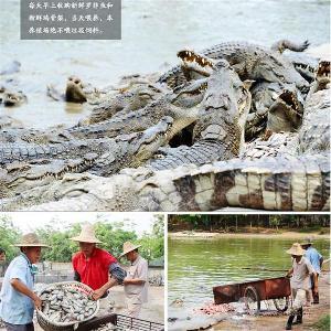 佛山鳄鱼养殖基地鳄鱼肉多少钱一斤
