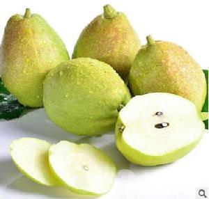 供应新疆库尔勒香梨2.5斤5斤大?#34892;?#26524;任选新鲜水果脆甜汁