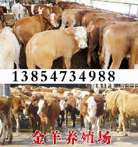 哪里养牛的多买小公牛多少钱