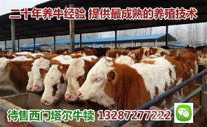 最近小牛苗价格