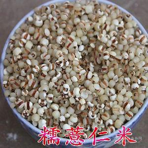 彝山香长期批发薏仁米 西双版纳薏米供应
