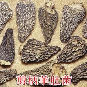 彝山香常年批發剪柄羊肚菌4-6CM云南野生菌羊肚菇干貨供應