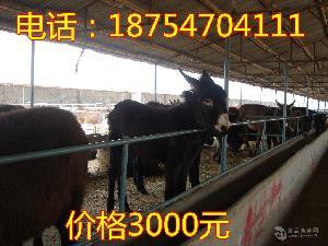 成品肉驢價格成品驢價格是多少錢