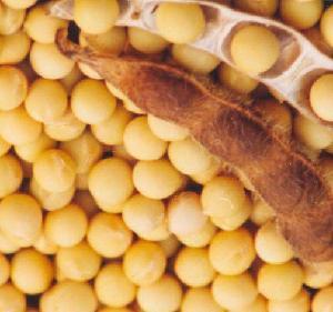 大豆粉脫腥機用微波脫腥