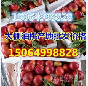 山东油桃价格差异大棚油桃批发价格