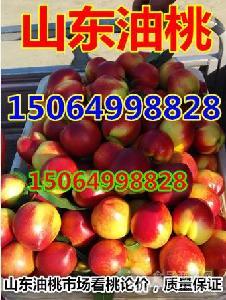 山东油桃产地价格有下降,今日大棚油桃价格