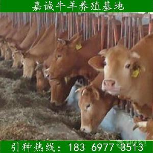 贵州省肉牛养殖场