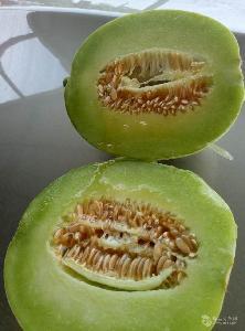种植批发香瓜 梨瓜口感甜价格优