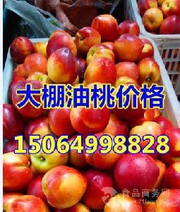 大棚油桃现在多少钱一斤?山东大棚油桃价格