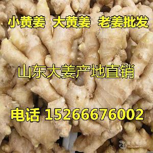 2018年山东生姜产地价格行情