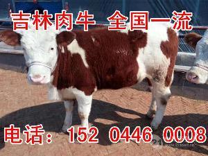 西门塔尔肉牛图片