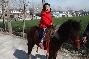 湖南哪里可以买到小矮马