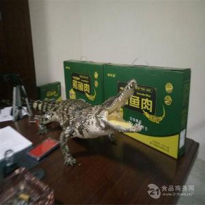 江蘇蘇州市40公分鱷魚苗