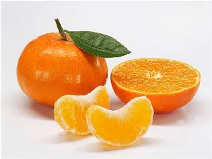 中柑所无核金诺,新诺一号柑橘苗