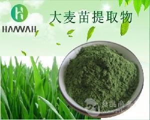 大麦苗提取物10:1 20:1 可定制 大麦苗浓缩粉